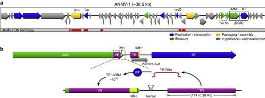 Retroelement-containing ANMV-1 genome