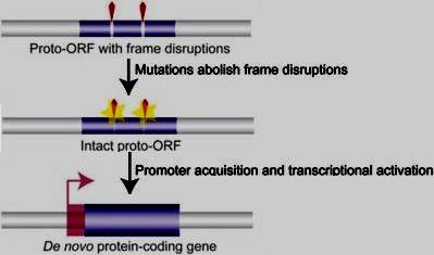 Origin of protein-coding genes from scratch