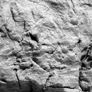 fossilized crinoid on Mars?